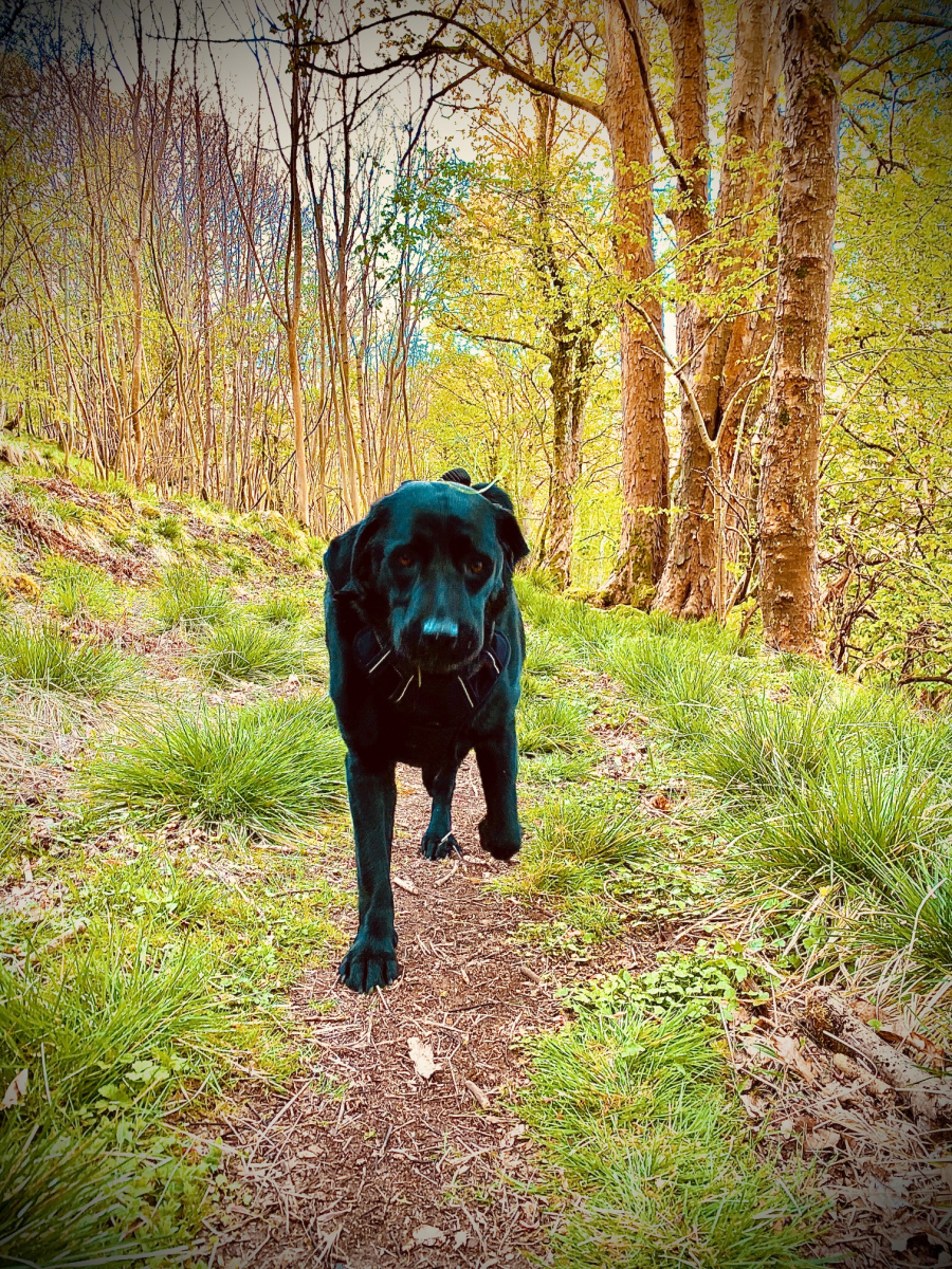 Craig Robertson: Cambusbarron Quarry Apr 2020 Juke the Dog on the-lower-path.