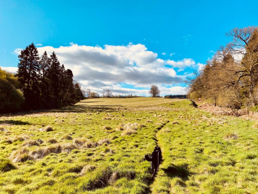 Craig Robertson: Three fields Gartur