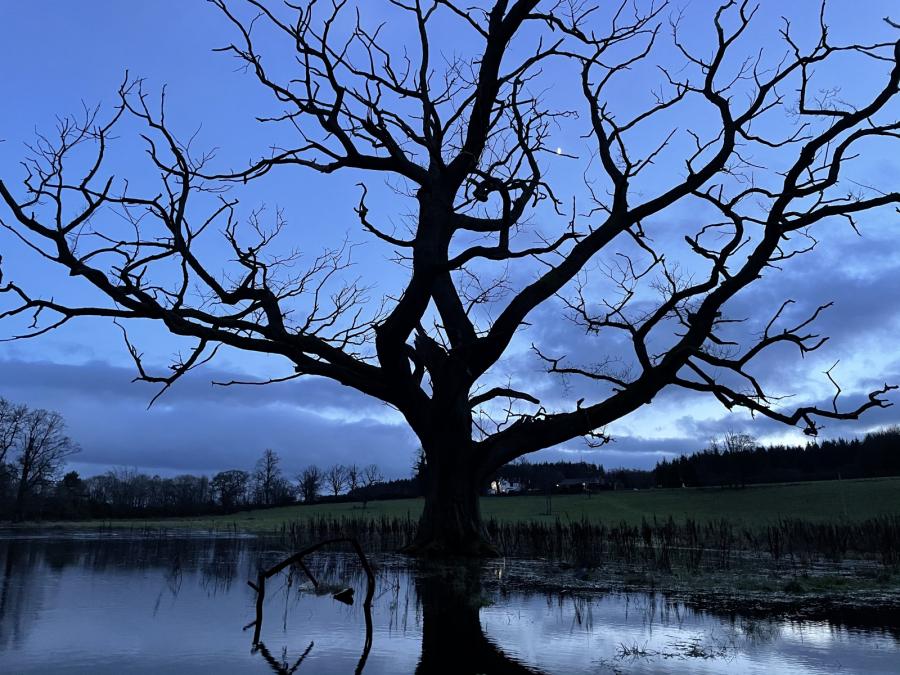 Emma Lategan: Tree Seven Sisters field