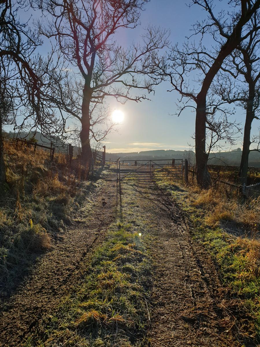 Gillian Sinclair: Sunday morning walk