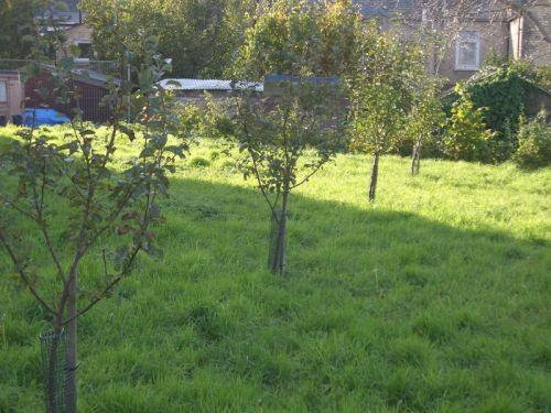 community-orchard